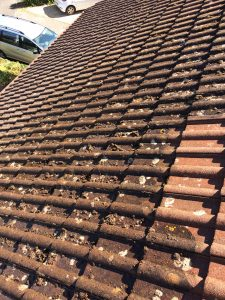 roof cleaning ringwood